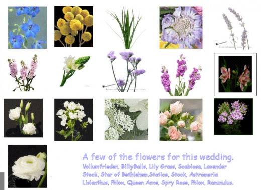 Some of the 27 flowers varieties we used to get a wildflower look.