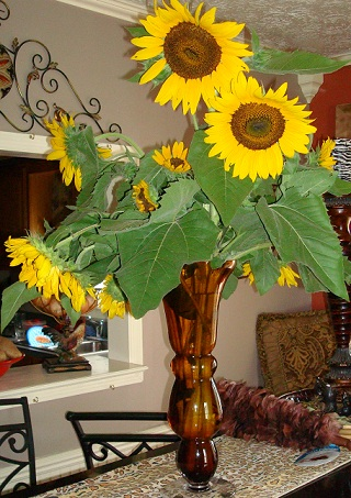 Larger vase of sunflowers from the garden