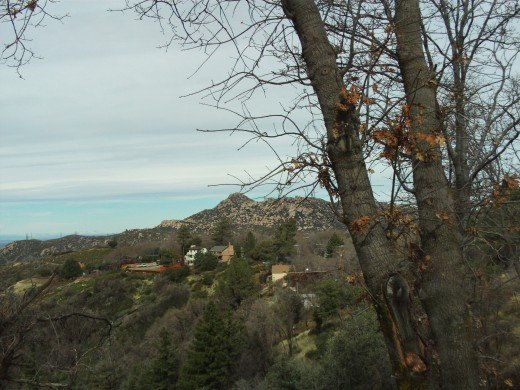 An oak tree in front of the view of The Pinnacles.