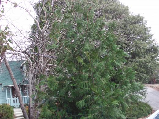 A small tree.