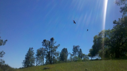 Look up and you will likely see California Condors soaring overhead.