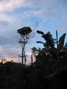 Looks incredibly vulnerable...a Kowal tree house.Image from papuatrekking.com