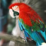 Gramalho profile image