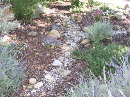 Showing dry creek bed, Lavender, Rosemary, and Alyssum.
