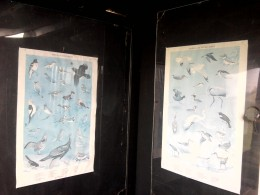 Bird identification posters inside bird blind.