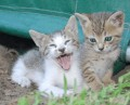 Common Worms Found in Cats