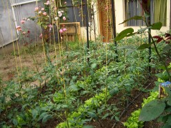 Composting: A Green Practice that is Good for Your Garden