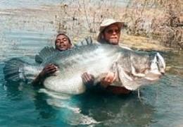Big Nile Perch