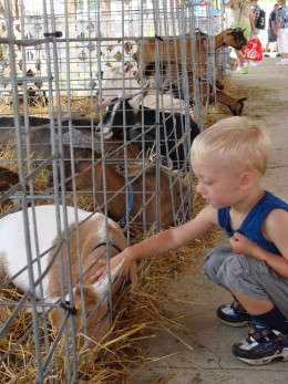 Kids love to pet the animals at local fairs.