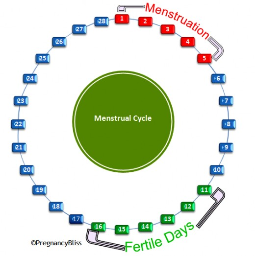 Not every menstrual cycle lasts 28 days. If a woman's cycle is shorter, it means her 'fertile days' arrive earlier. If she has a long cycle, ovulation takes place later and consequently the fertile days are later on in the cycle and not 'mid-cycle'.
