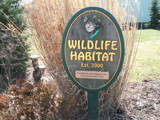 Wildlife Habitat at Bergholz, New York