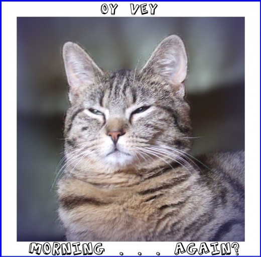 """OY VEY"" mugs and other light-hearted items availavle at the web store CELEBRATING CATS.  Click on blue link below."