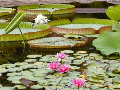 How to Build a Pond in Your Backyard with Tips for Pond Plants
