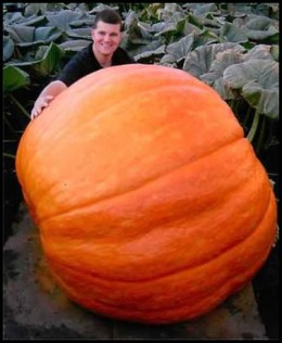 That is one BIGGGG pumpkin!