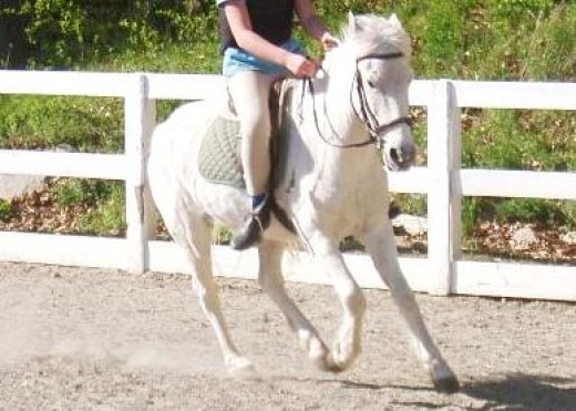 White Riding Pony