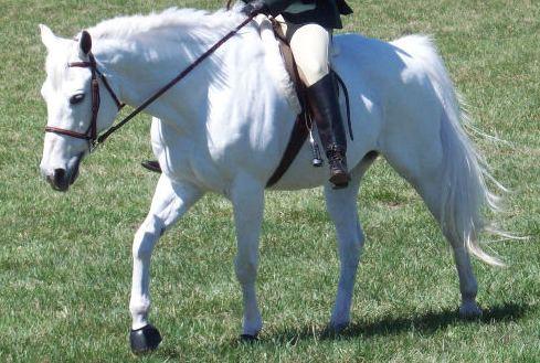 White Pony Pic and Horseback Rider photo