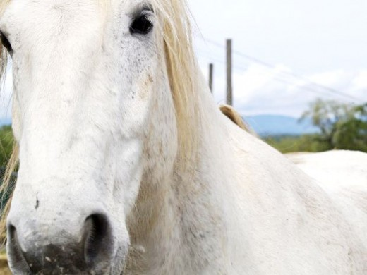Horse Face Picture
