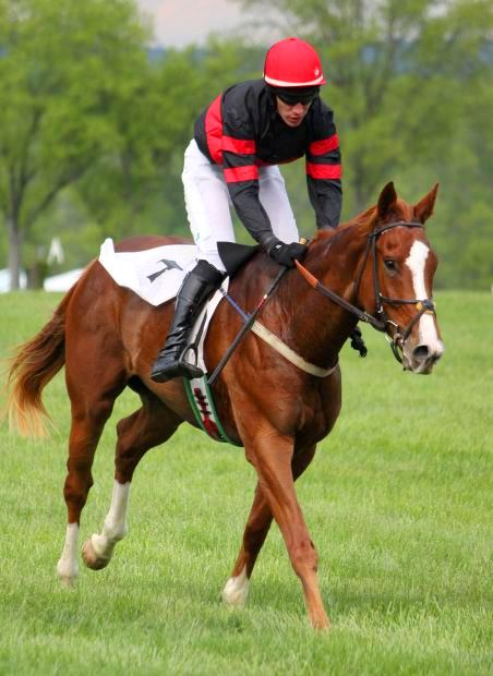 Red Horse Pic - Racing Horse Pic