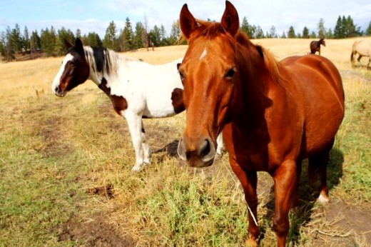 red wild horse picture