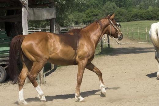 shiny red horse