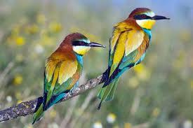 cool bird watching