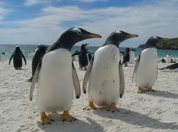 Penguins - cool bird watching