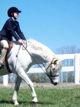 white pony australian ponies