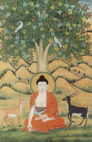 Tree under which Buddha has attained Enlightenment