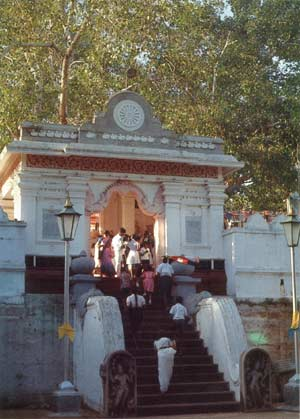 The bodhi tree at Anuradhapura, known popularly as the Jaya Siri Maha Bodin Vahansa, Sirima Bodinnanse, or uda maluve bodi sami