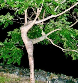 """Dancer Tree""...what I believe to be the view of a dryad."