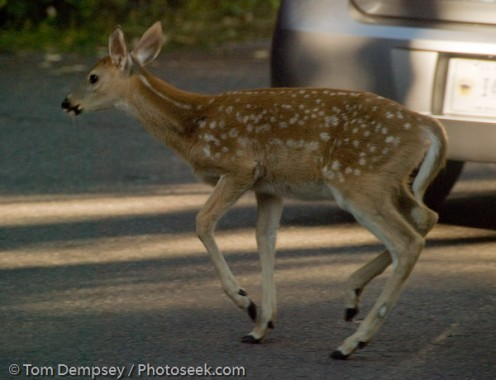 Bambi's revenge!