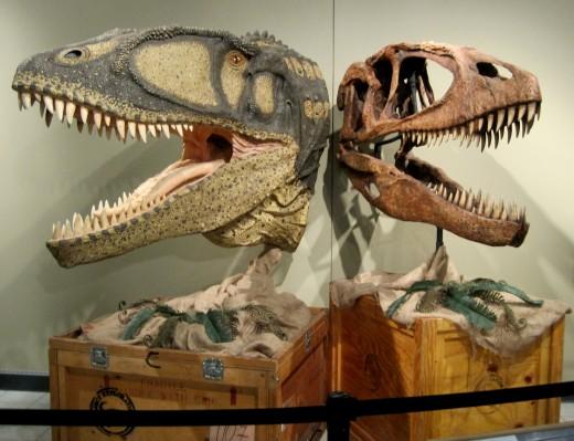 Carcharodontosaurus Flesh & Skull Models (meat eater)