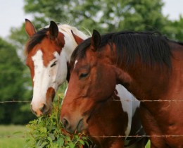 horses eating leaves
