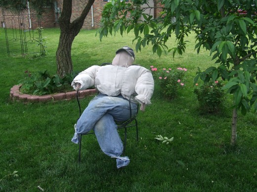 We made this scarecrow over the winter and now he is protecting our peach tree from pests. We named him...Flop-along-Cassidy