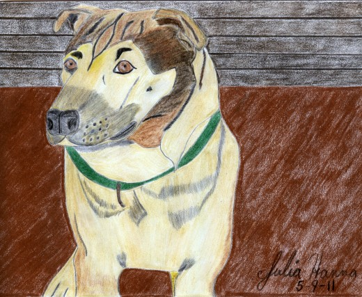 The scanned drawing of Buster.