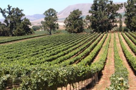 A Beautiful Drive in Santa Barbara's Wine Country