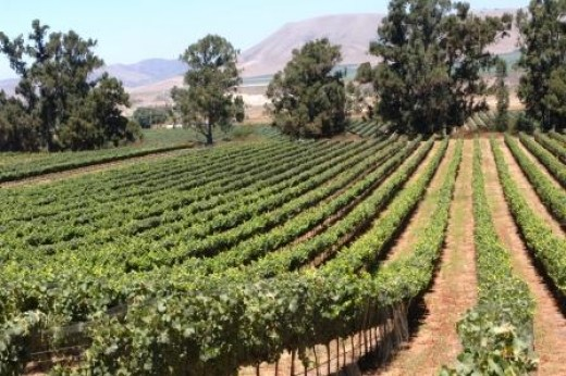 A Beautiful Drive in Santa Barbara's Wine Country