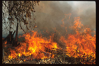 This slash and burn agriculture, here in Peru, is also common in the Amazon basin and is leading to a dramatic increase in desert growth. Such practices give only three years of agriculture at best.