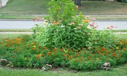 A Quick fix for a bare spot is a annual garden started from seed.