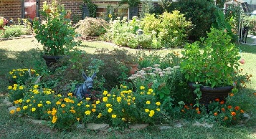 The FREE Garden filled with Perennials and Annuals