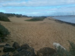 Brighton Dog Beach Melbourne - A safe, fenced, offlead area for your dogs