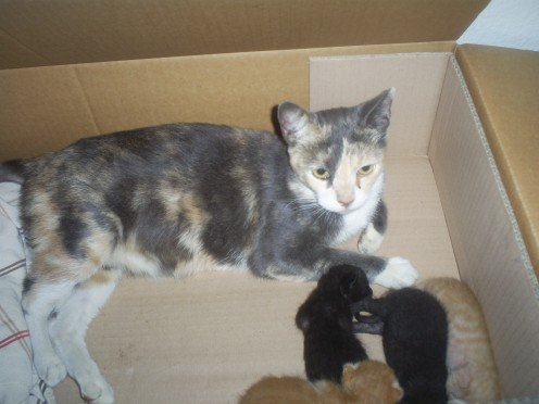 The stray cat with her kittens.