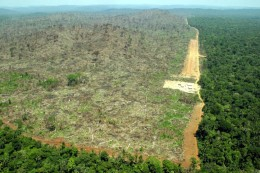 Illegal land clearance to make way for soy production in Para, Brazil