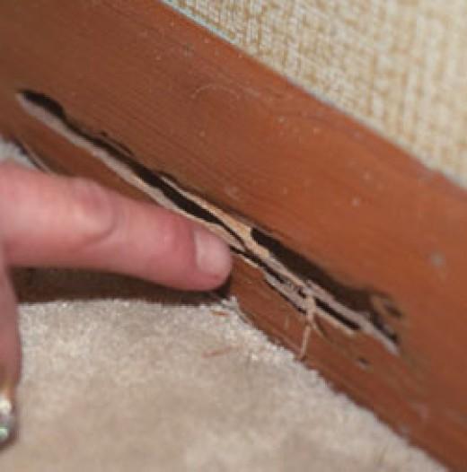 Houston Termite Control