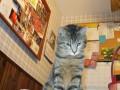 Funny Adventures in Cat Adoption, Part Five