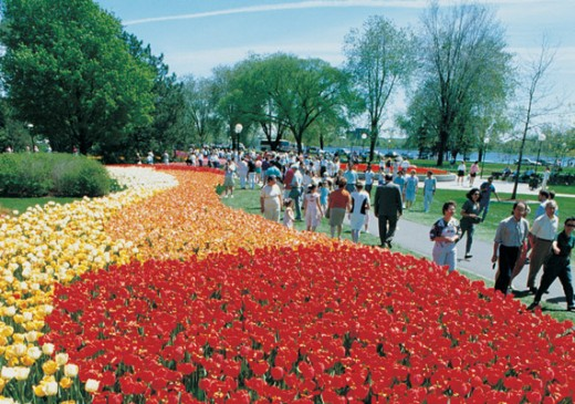 Tulip Festival - 2nd and 3rd week of May