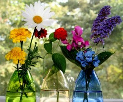 You want your cut flowers to remain beautiful for as long as possible!