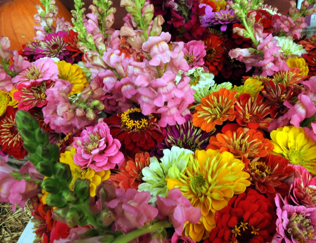 How To Extend The Life Of Cut Flowers Hubpages
