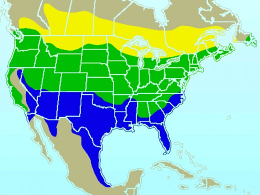 Range/distribution map of the American Goldfinch.       YELLOW: Summer-only range; GREEN Year-round range;  BLUE Winter-only.