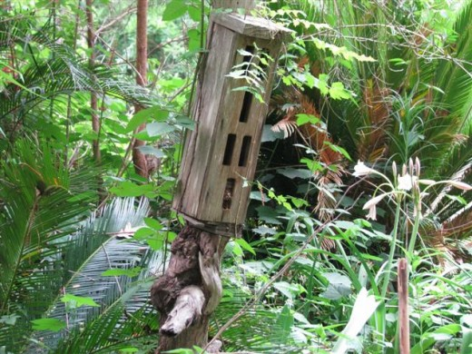 The butterfly shelter where the Prothonotaries nested.